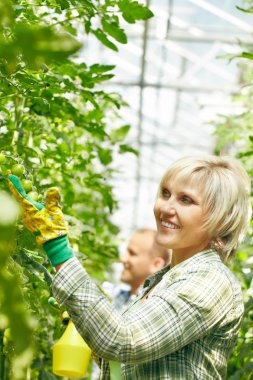 Woman examining plants in greenhouse