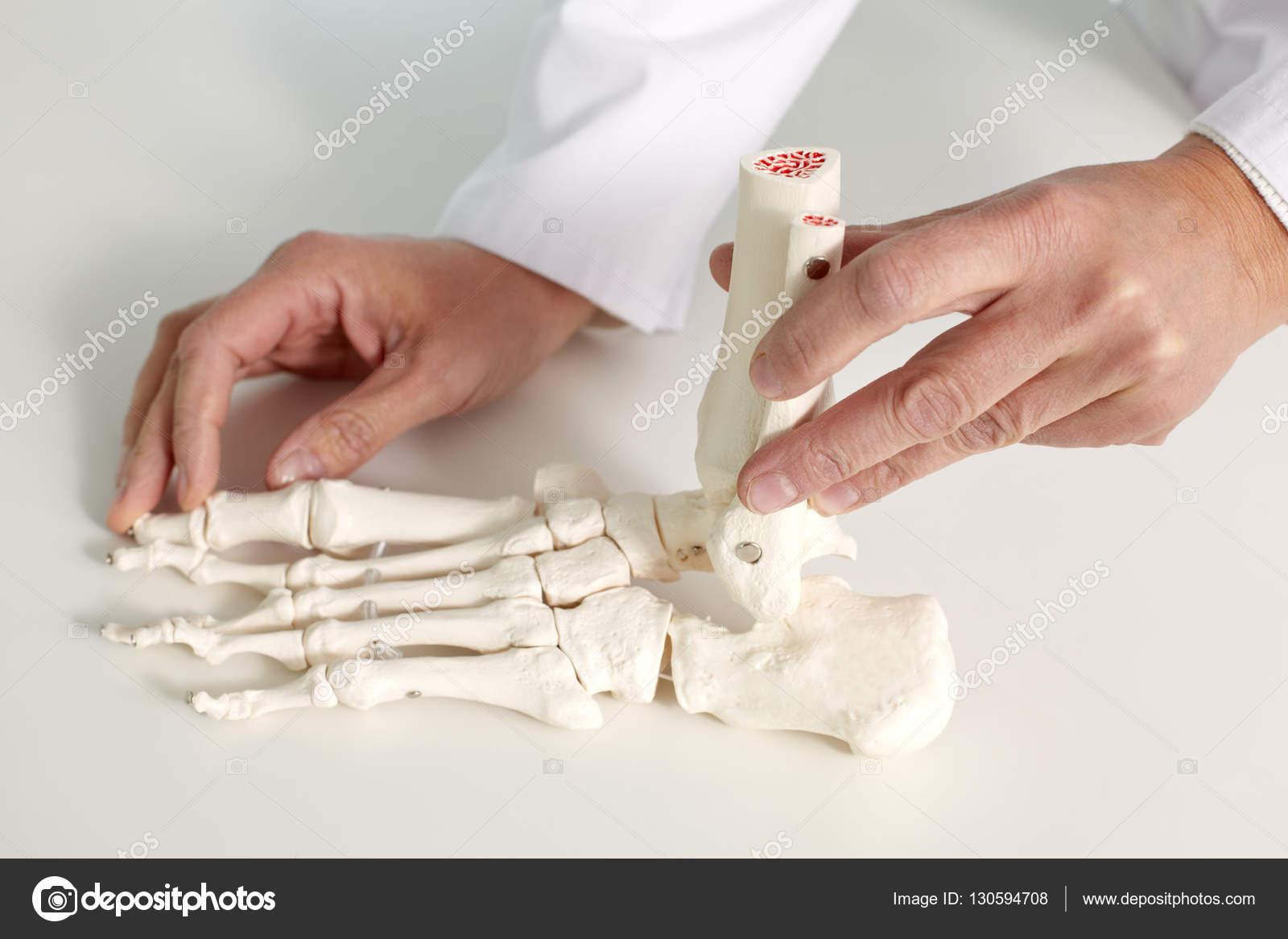 modelo de huesos del pie — Foto de stock © pressmaster #130594708