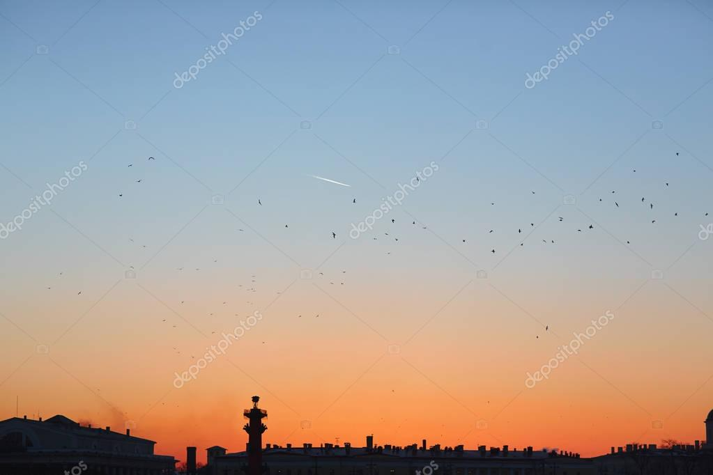 Blue sky at sunset with flock of birds