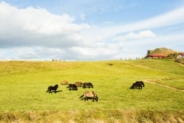 Herd of horses grazing on green pasture stock vector