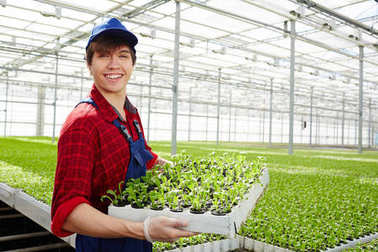 Successful farmer holding green crops of lettuce in his glasshouse