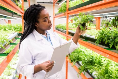 Young African female biologist with document standing by shelves with green seedlings and holding one of them