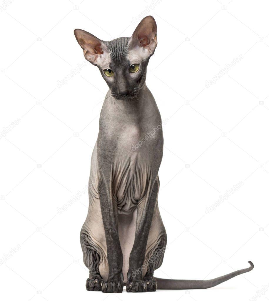 Nahá nahá kočička