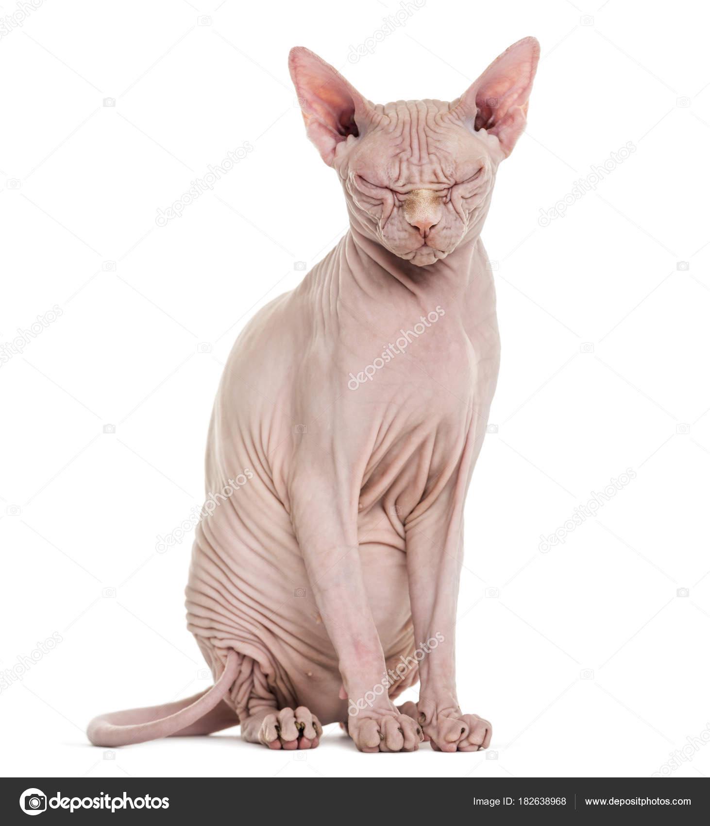 bezsrstá kočička videa