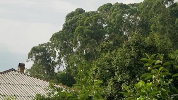 Pohled z okna na eukalypty rostou