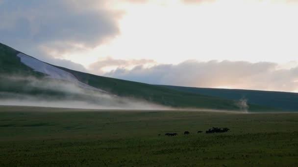 krajina z alpské louky ve večerních hodinách. koně pasoucí se v poli