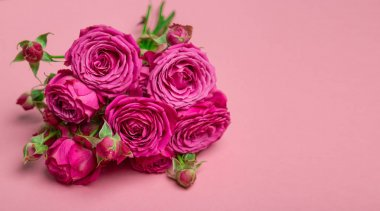 Pion-shaped roses, a bouquet of pion-shaped roses on a colored background, pink pion-shaped roses. Gift for St. Valentine's Day and March 8. Roses