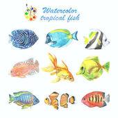 Sbírka tropických ryb, malované akvarelem.