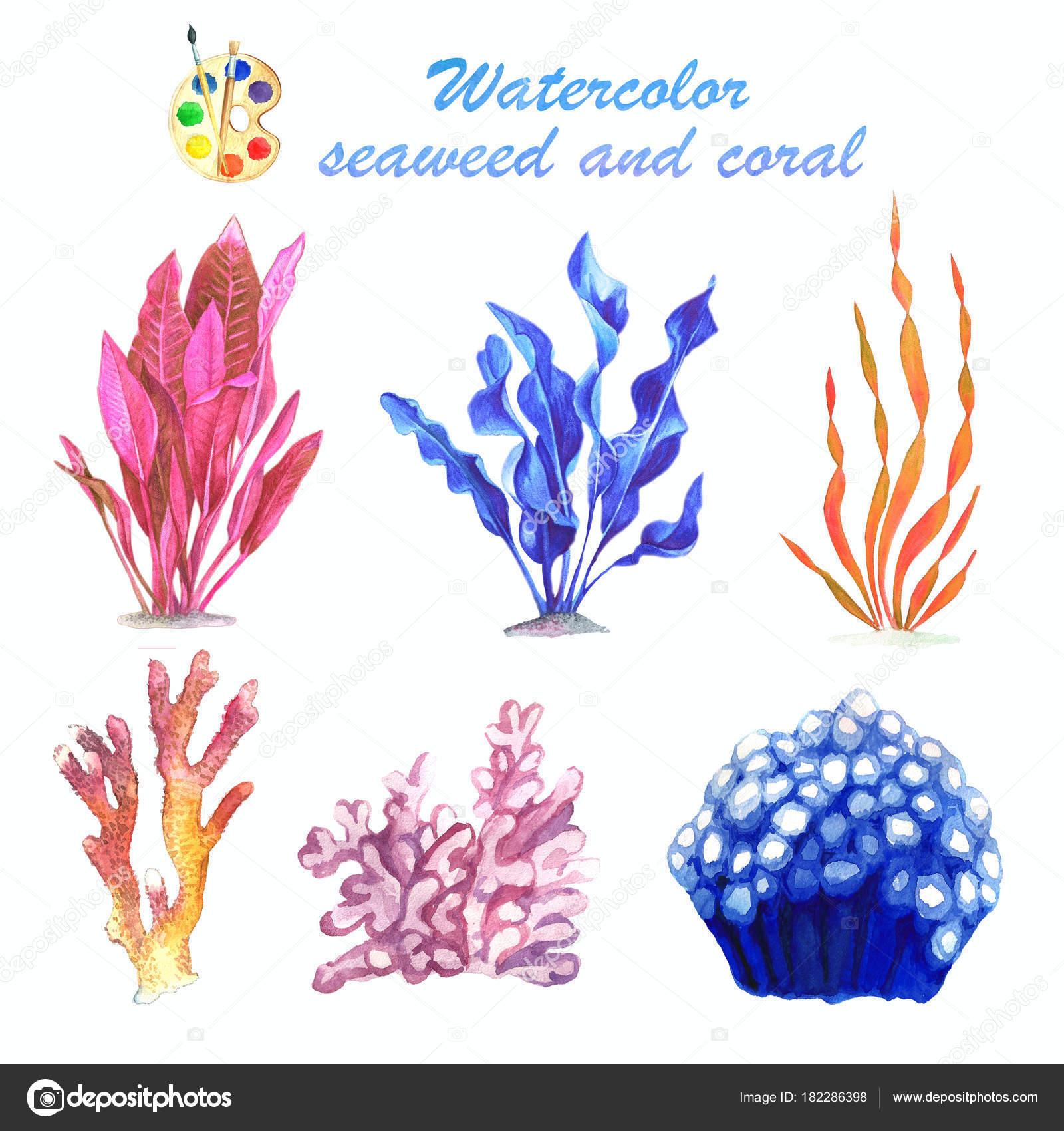 Acquerello Di Alghe E Coralli Su Una Priorità Bassa Bianca Foto