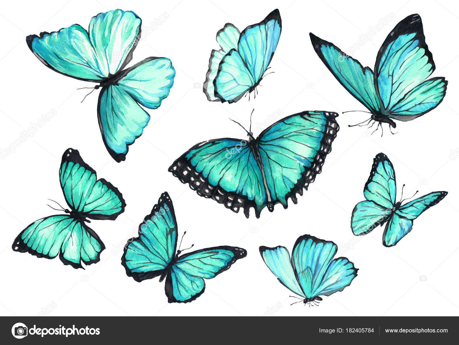 Dibujos Mariposas En Vuelo Acuarela De La Coleccion De Mariposas