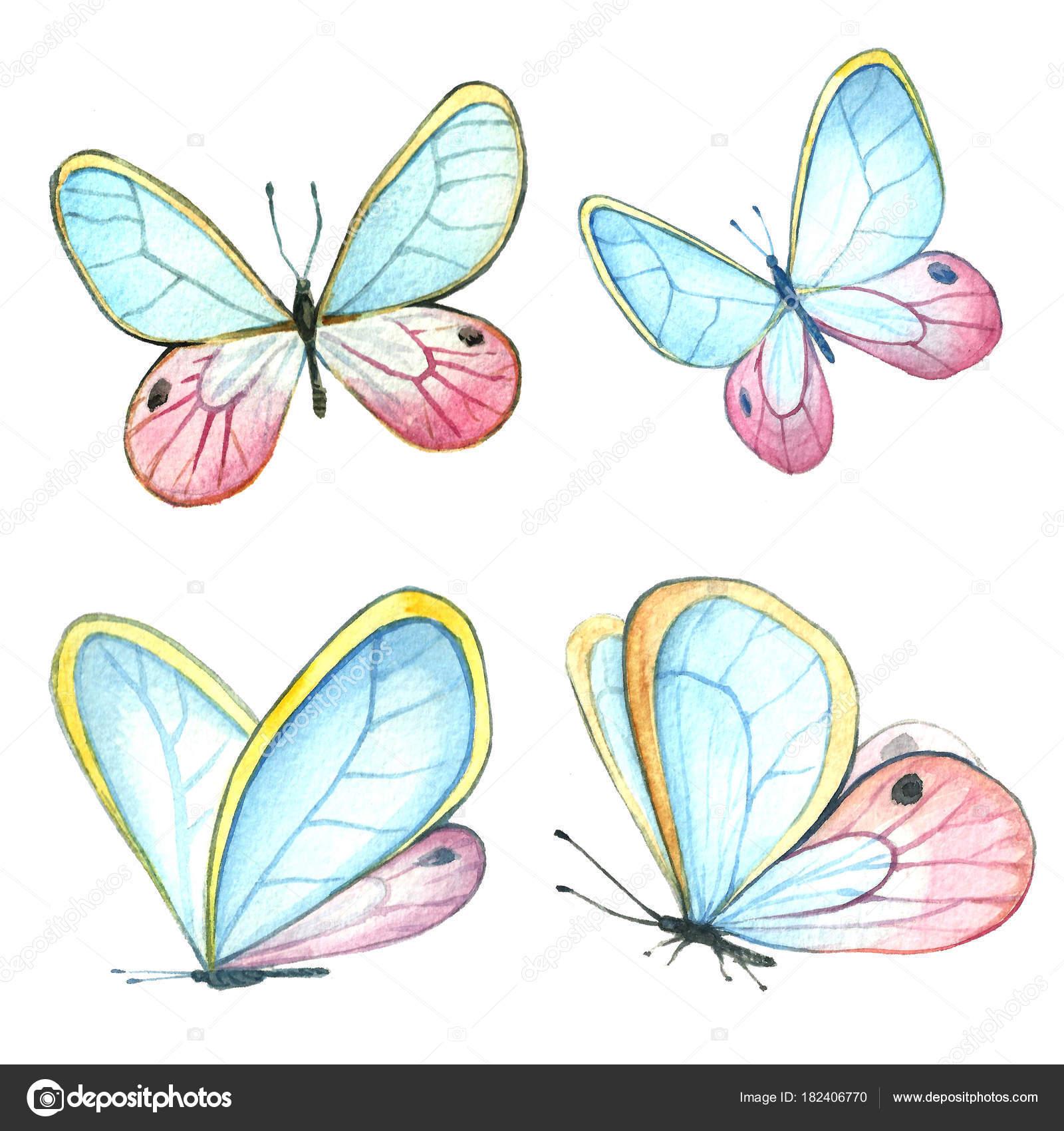 Dibujos Flores Y Mariposas Pintadas Acuarela De La Colección De