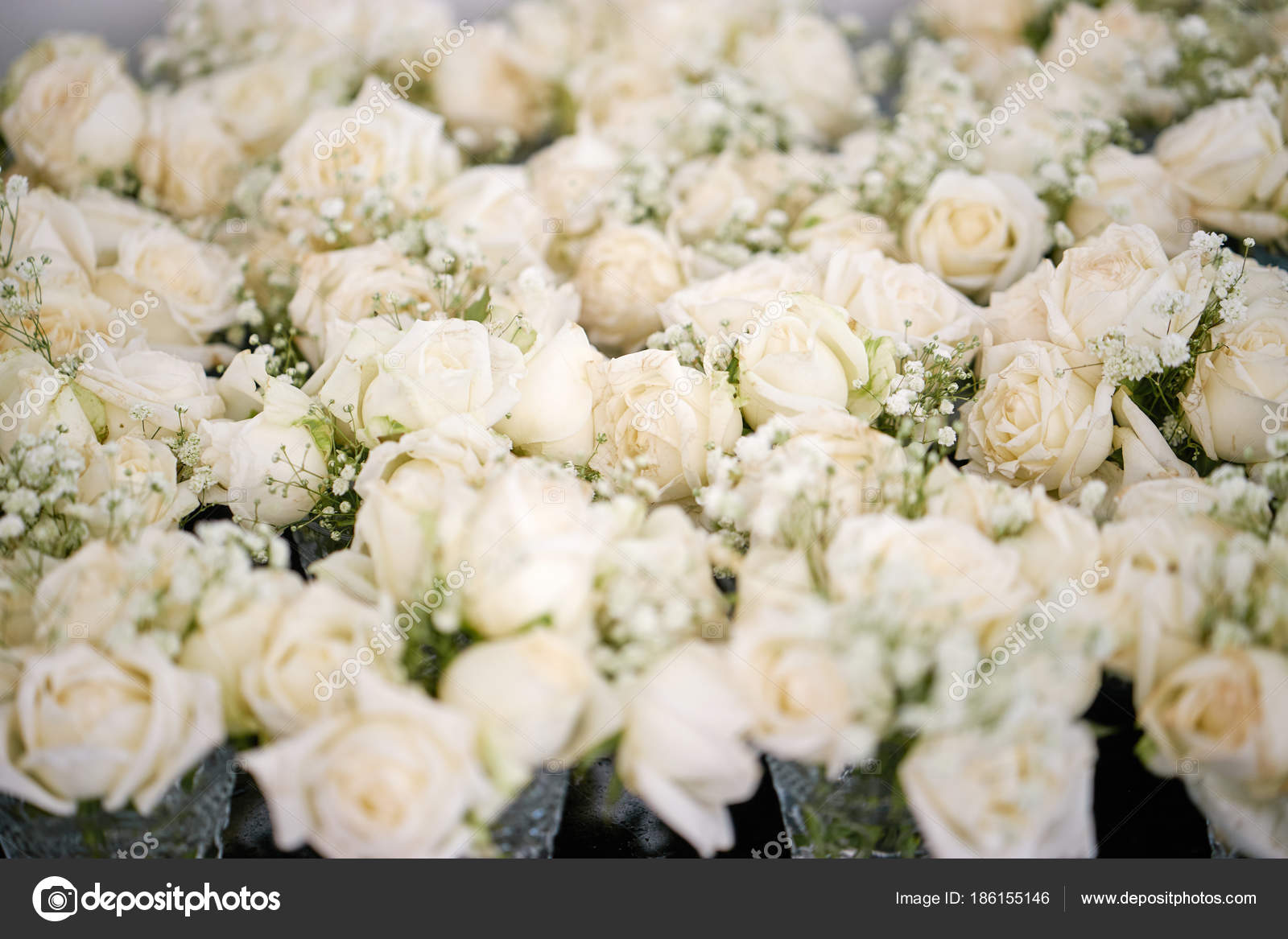 Bunch white cream roses baby breath gypsophila flowers floral a bunch of white and cream roses the babys breath gypsophila flowers floral for wedding venue decoration top view closed up photo by mrseksan mightylinksfo