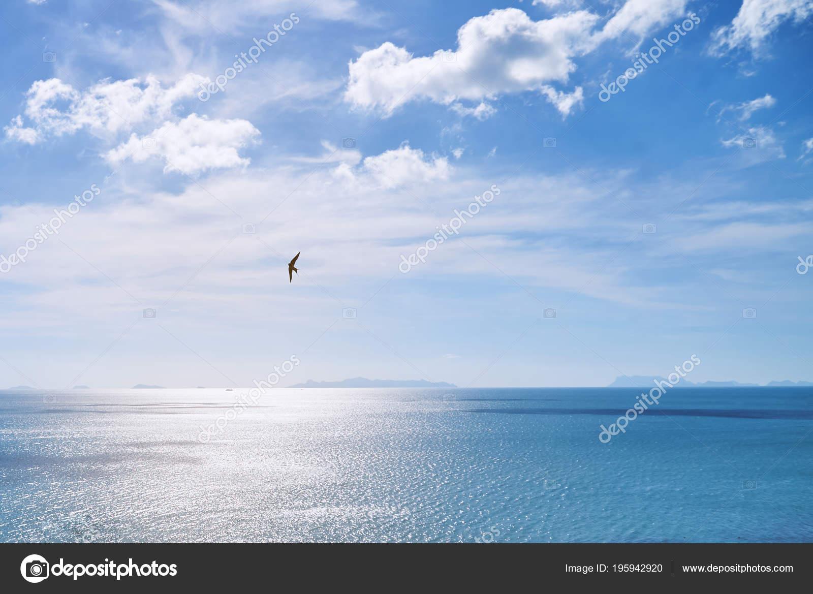 Aves Volando Marco Vista Panorámica Costera Durante Atardecer Con ...