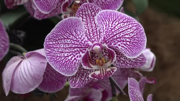 Multicolored orchids in Singapore