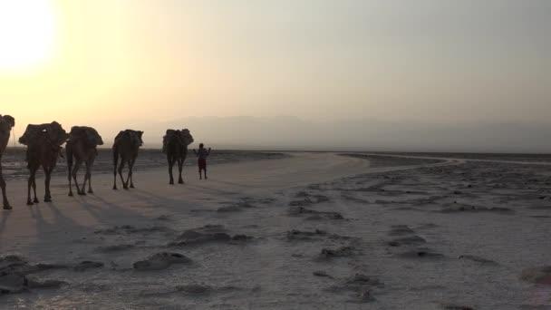 Caravans with salt in the desert of Danakil