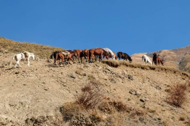 A team of horses hiking up the mountain