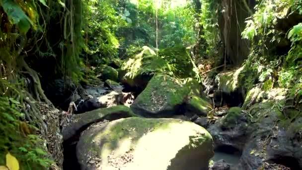 Entspannender Blick auf den tropischen Dschungel während des heißen Tages auf der Insel Bali, Indonesien