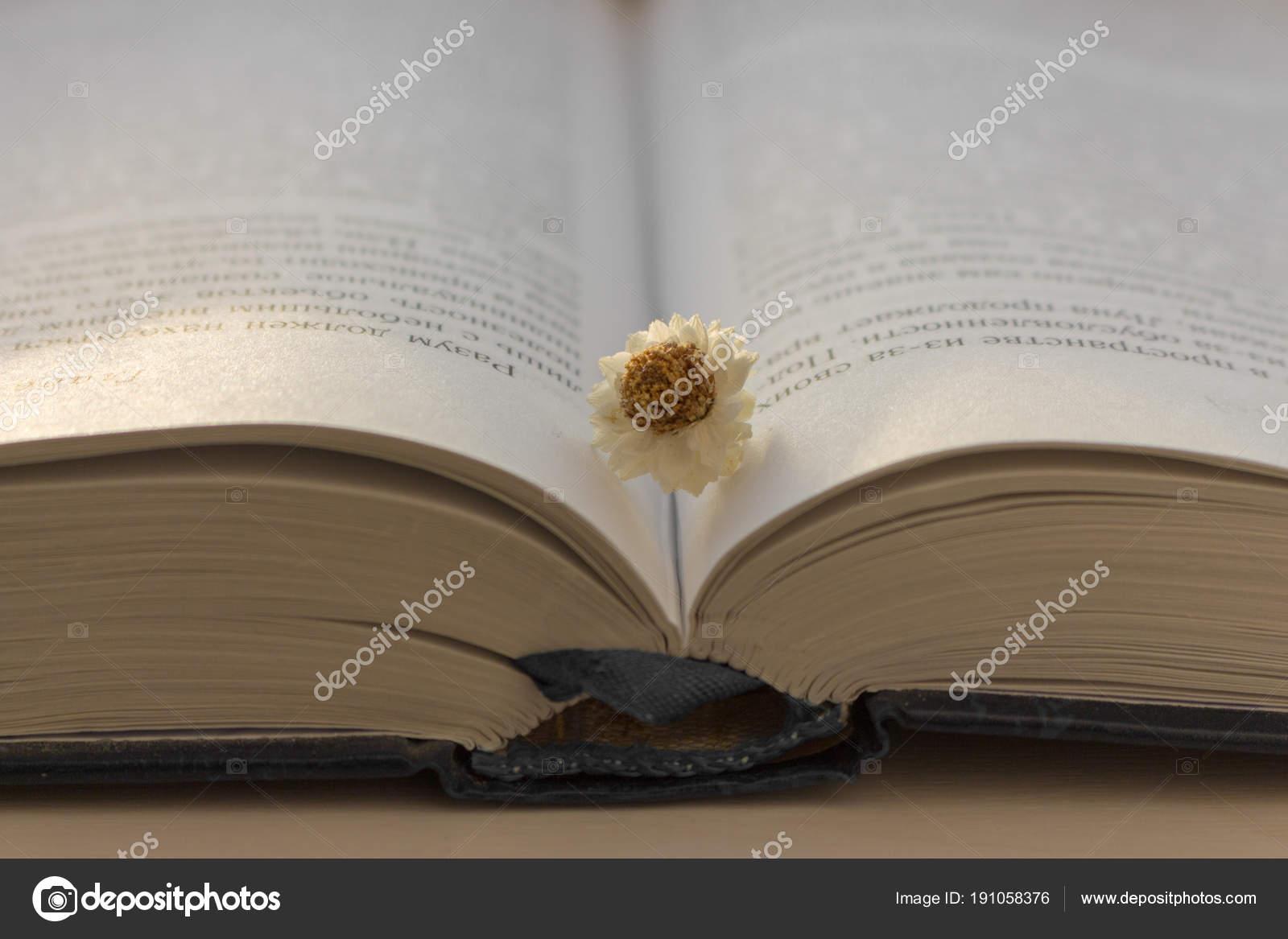 Livre Bleu Ouvert Blanc Fleur Patine Sur Une Table Bois