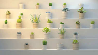 3d rendering of many realistic cactuses with pots on white abstract shelf or stairs. Front angle, side view.