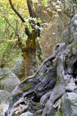 Enchanted nature north of Pozar in Maecdonia, Greece