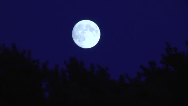 The movement of the full moon on a blue sky over silhouettes of tree