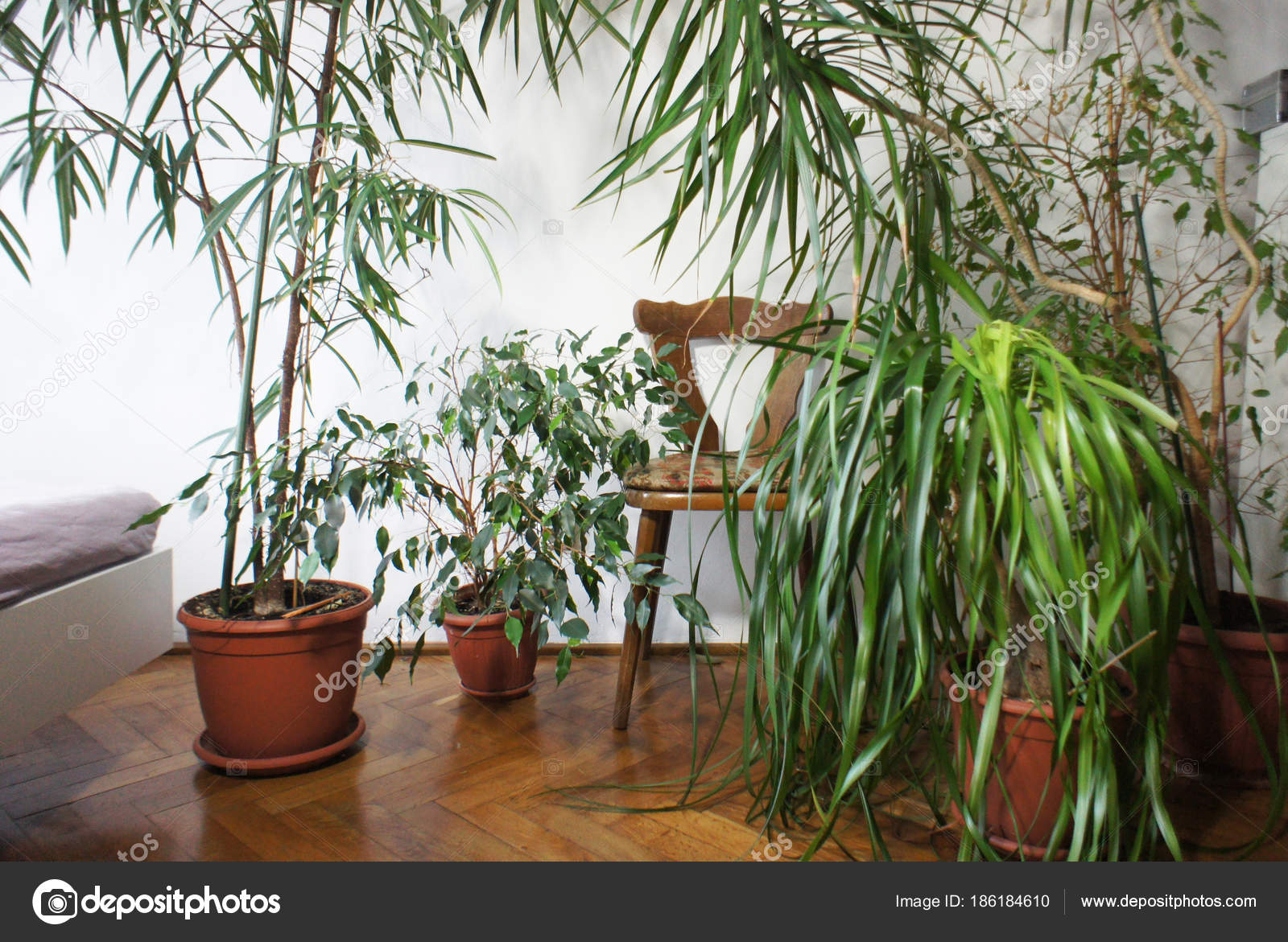 Schöne Mischung Von Zimmerpflanzen Raum Stockfoto Tannjuska