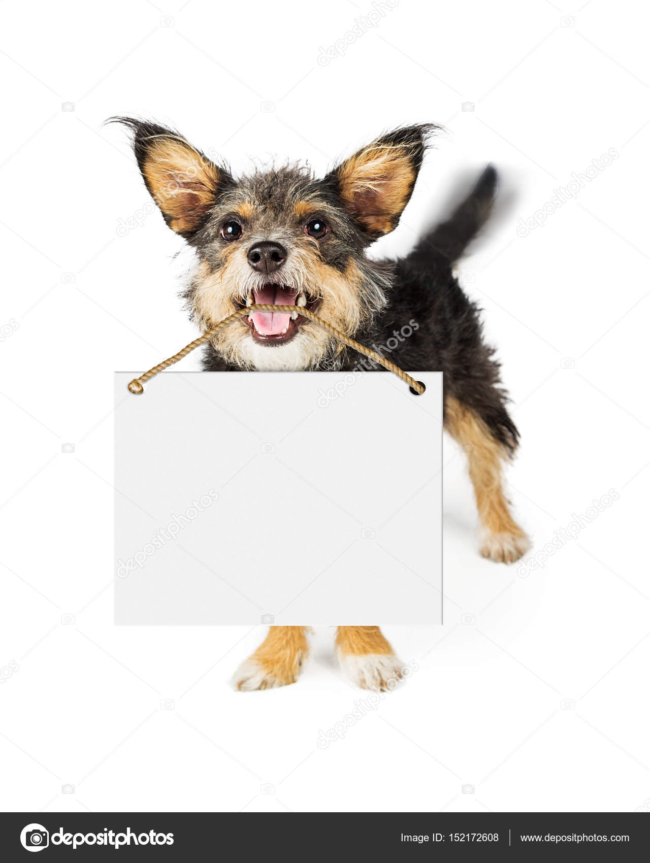 Happy Dog Carrying Blank Sign — Stock Photo ... - photo#12