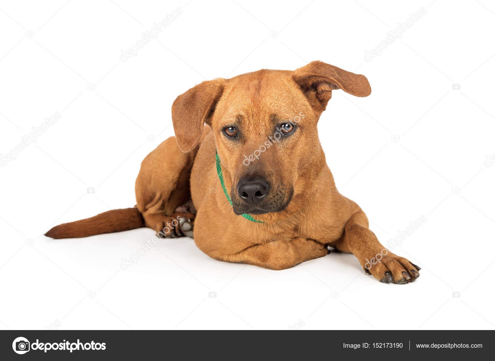 Mischling Hund Stockfoto Adogslifephoto 152173190