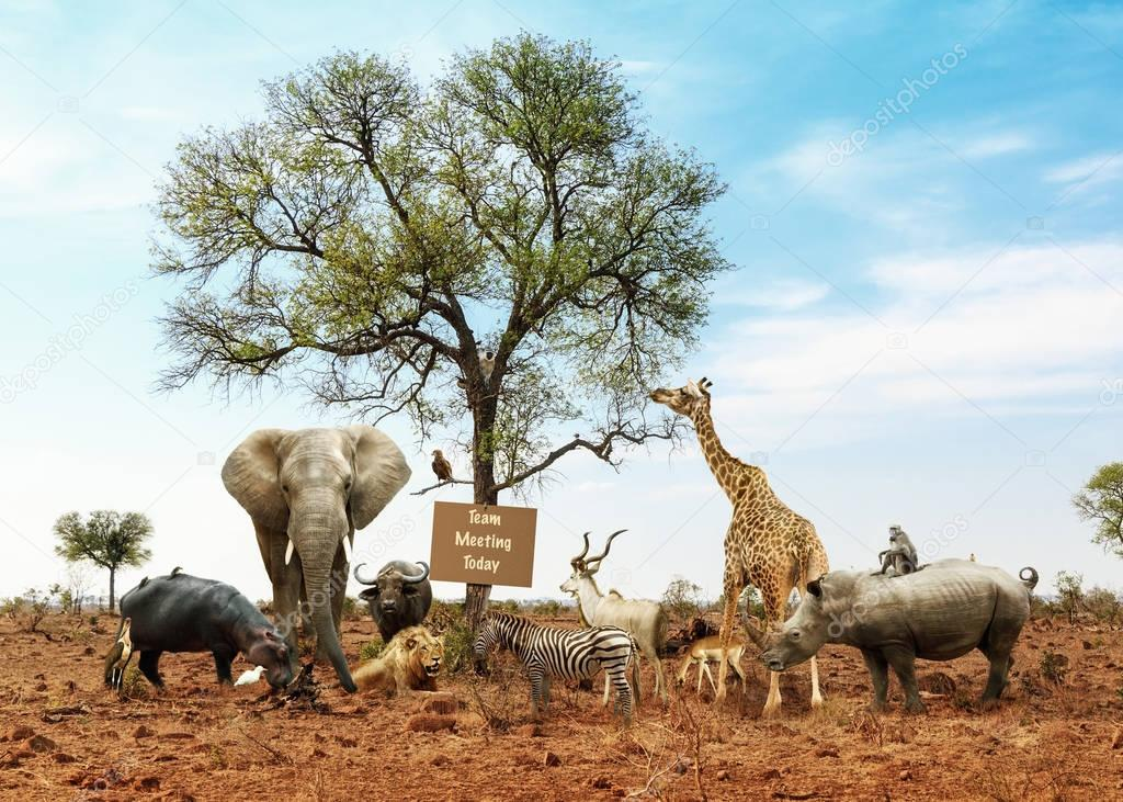 wild animals meeting as a team