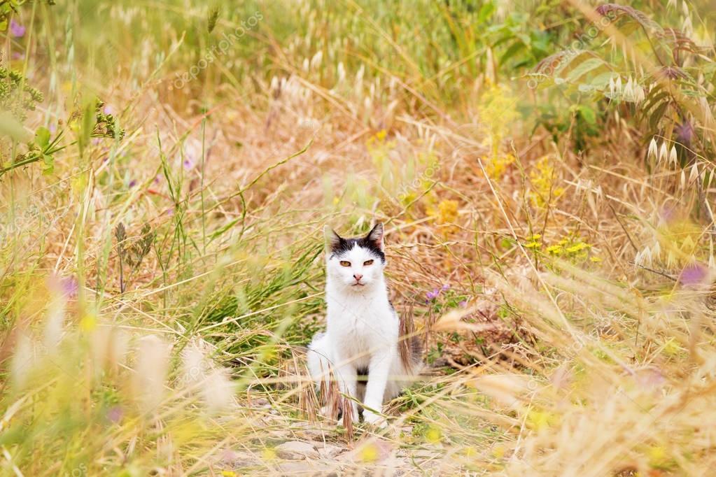Cat in field of tall grass
