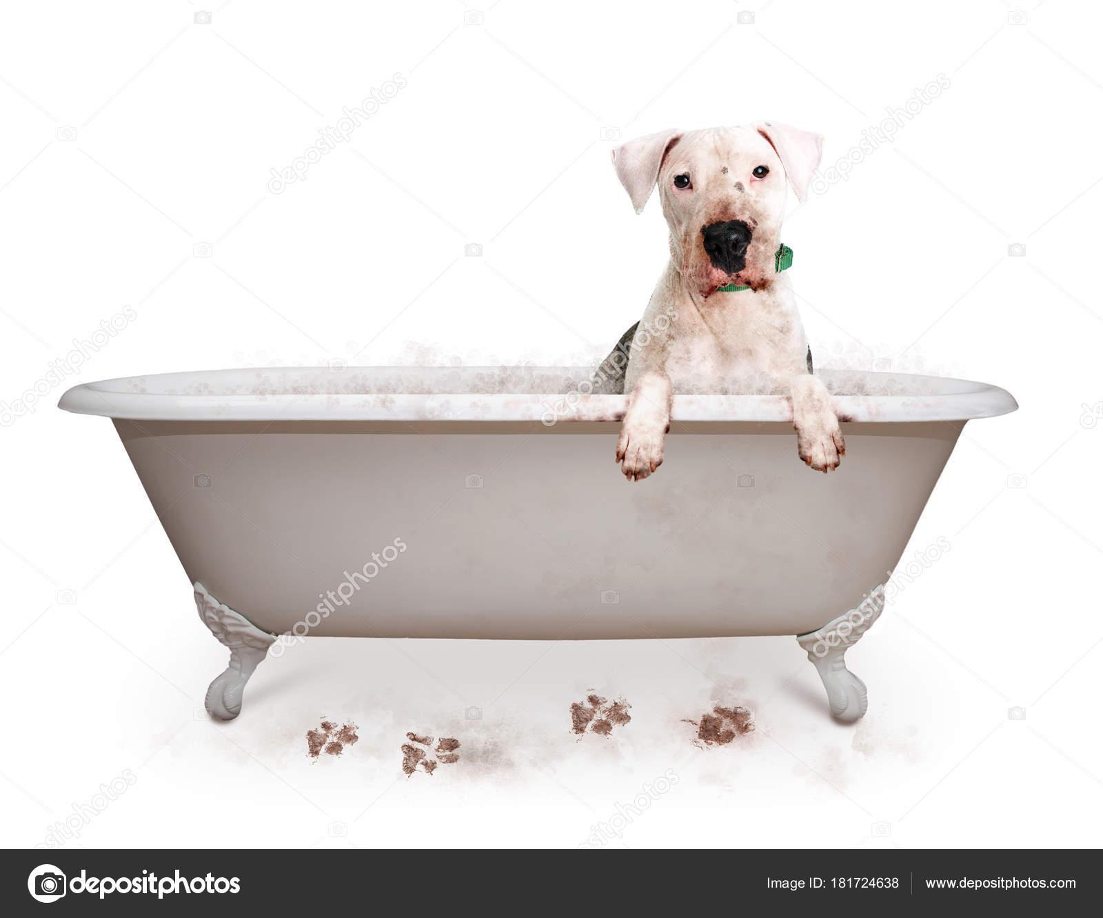 Funny Photo Dirty Dog Bathtub Paws Hanging Edge U2014 Stock Photo