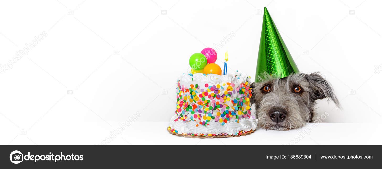 Schattige Hond Met Partij Hoed Verjaardag Taart Horizontale Web