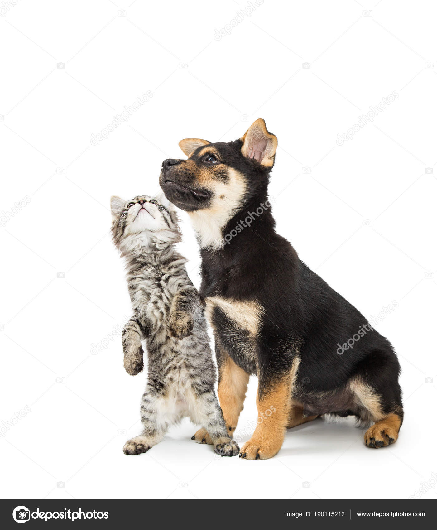 cute puppy kitten together white looking blank white room text