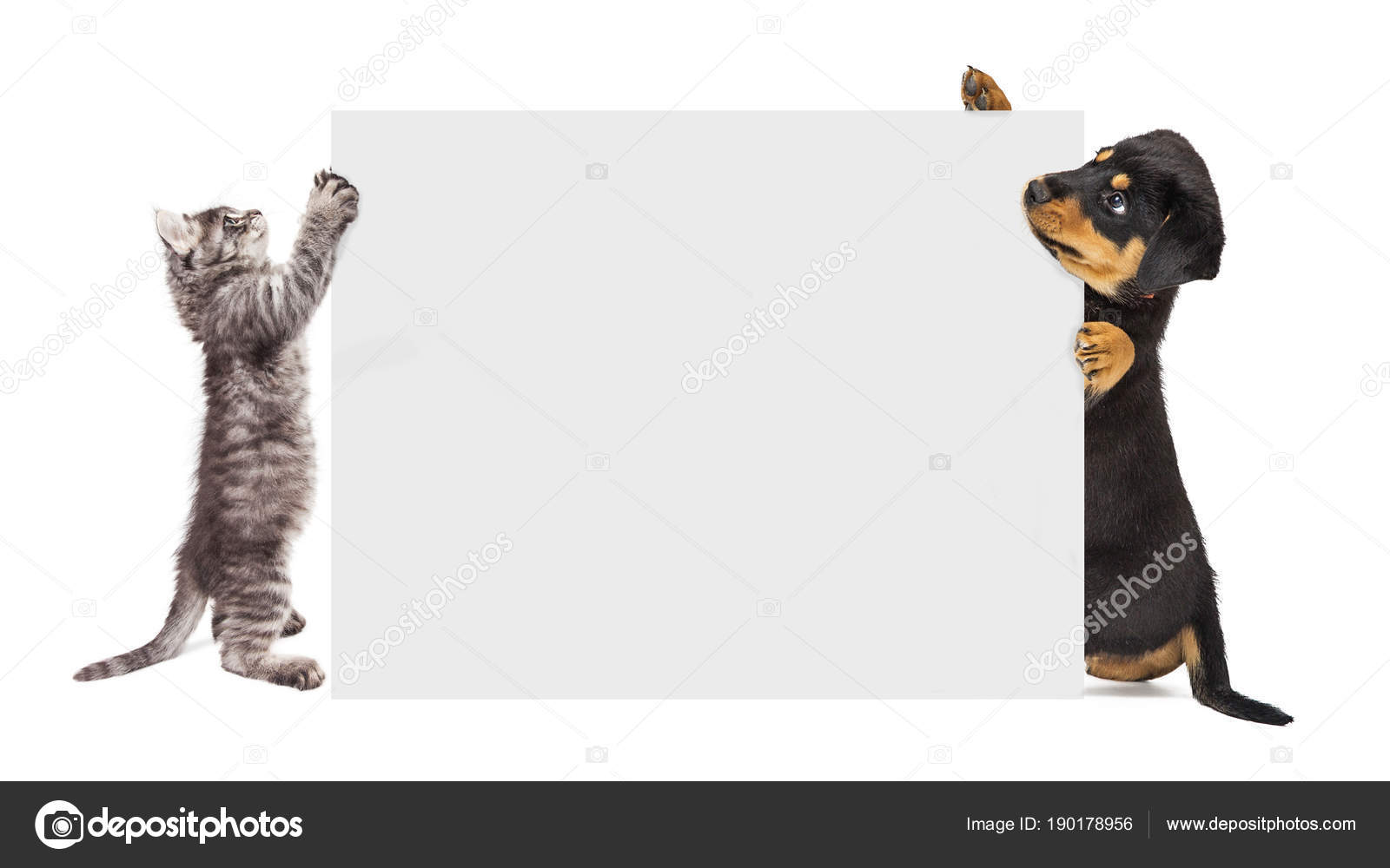 cute puppy kitten holding blank sign enter text stock photo