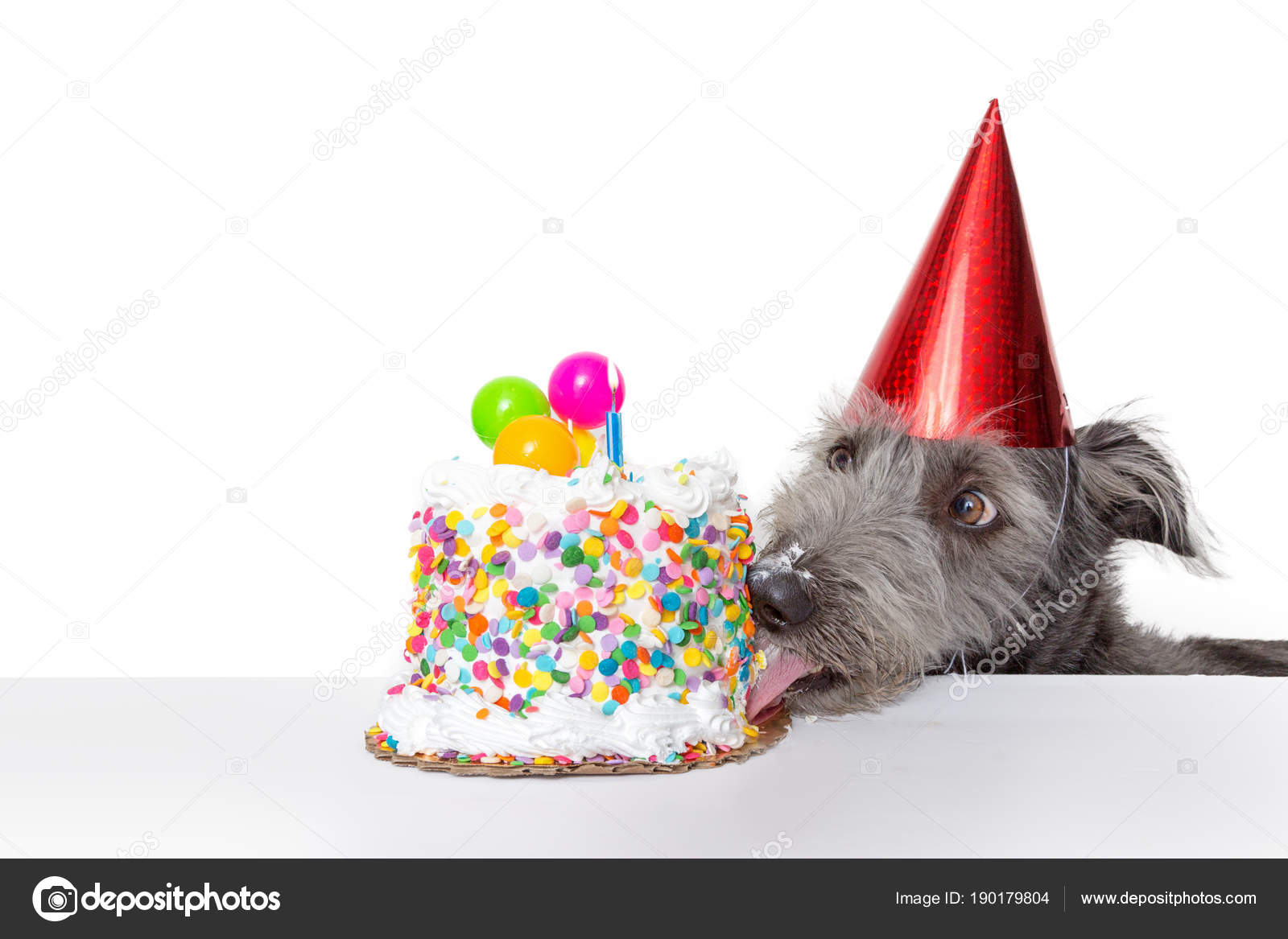 Funny Photo Dog Wearing Party Hat While Licking Frosting Birthday