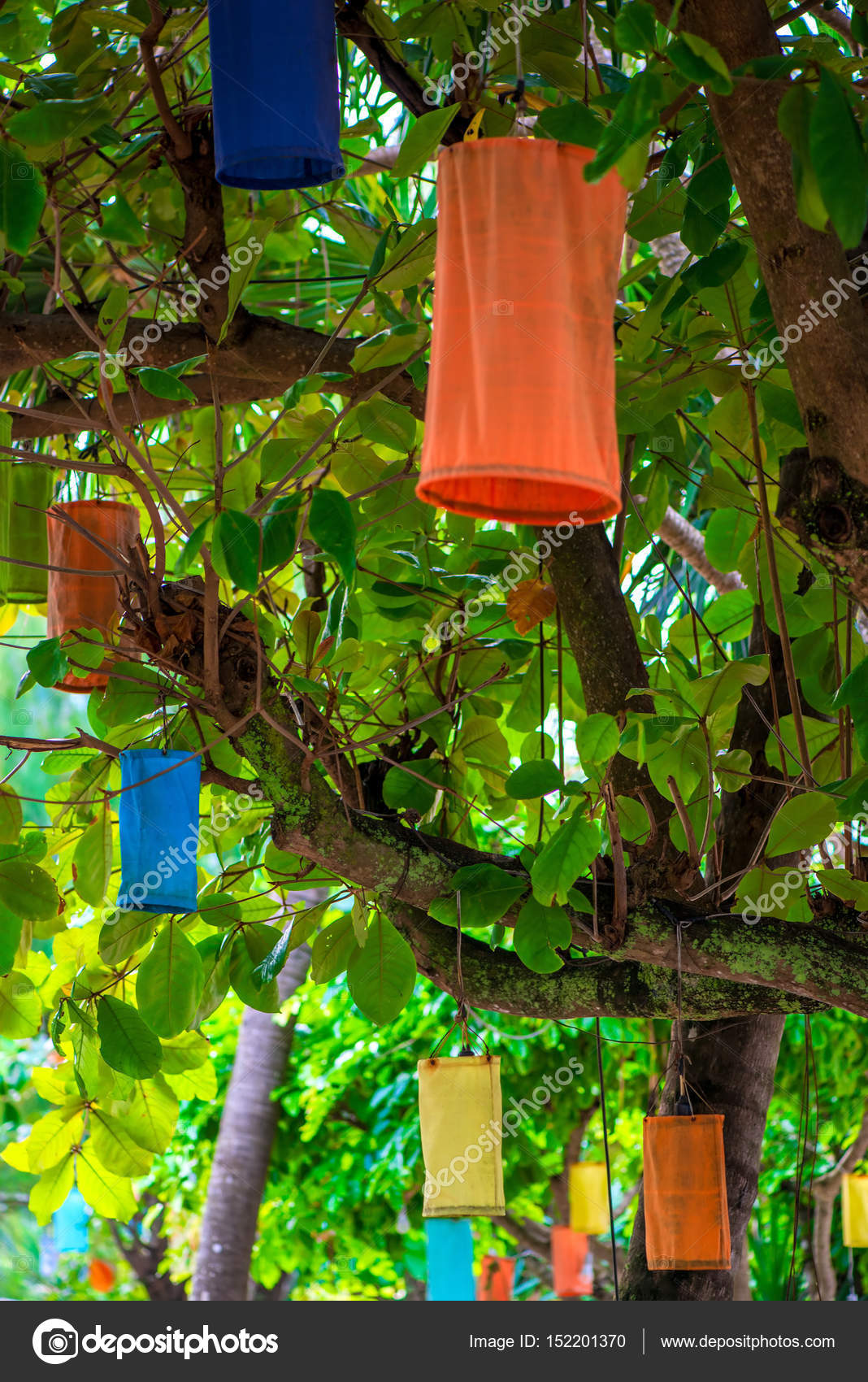 Multi-colored Asian lanterns hanging on trees for lighting at ni ...