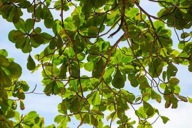 branch of a tree with green leaves against a blue sky on a beach