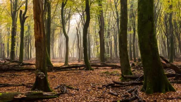 Časová prodleva z bukového lesa, Nizozemsko