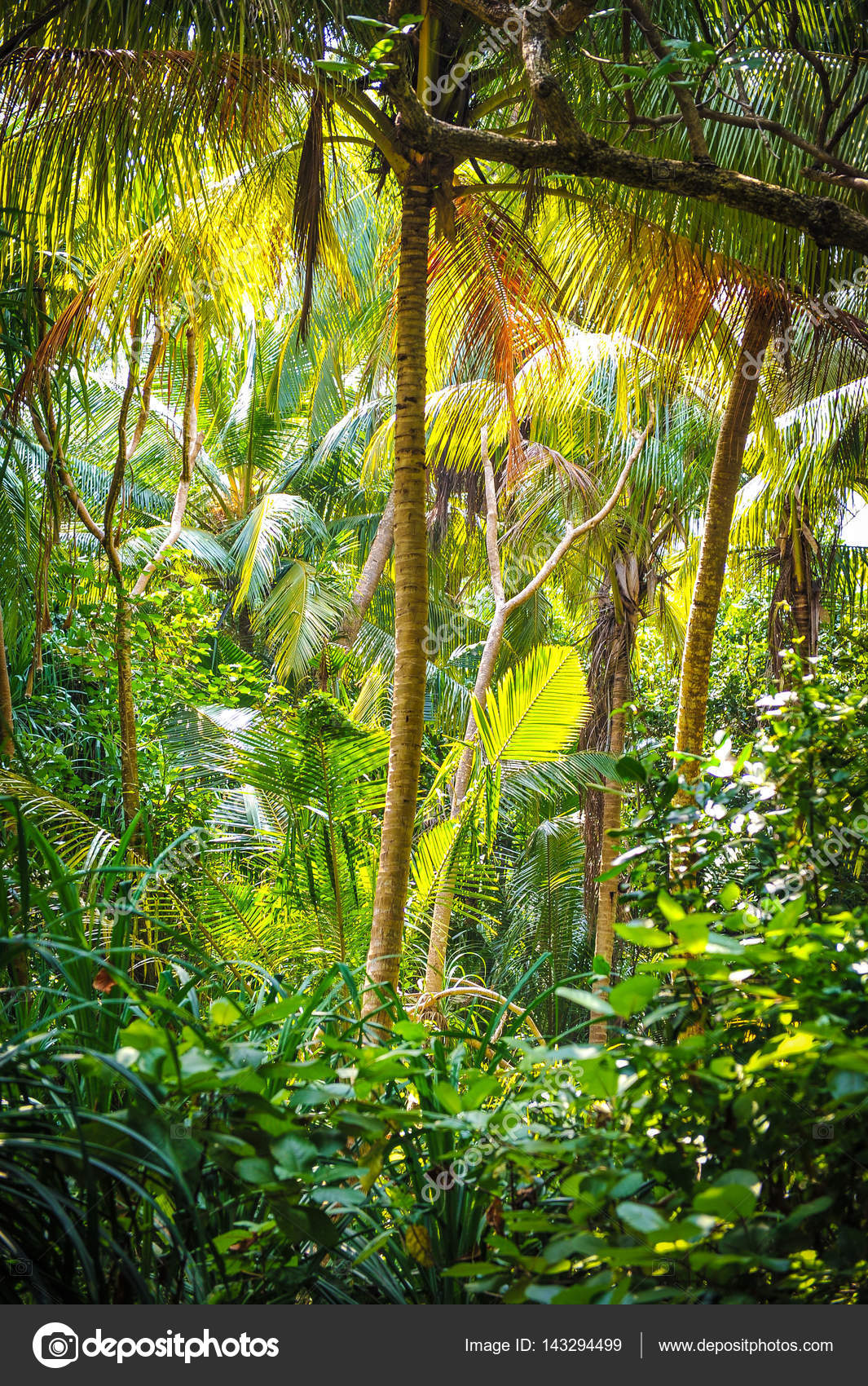 Palm Leaves Tropical Forest On The Island In Indian Ocean Beautiful Landscape Of Humid Tropical Jungle Picture Of A Tropical Forest Background Stock Photo C Iancucristi 143294499 All illustrations are free to download! palm leaves tropical forest on the island in indian ocean beautiful landscape of humid tropical jungle picture of a tropical forest background stock photo c iancucristi 143294499