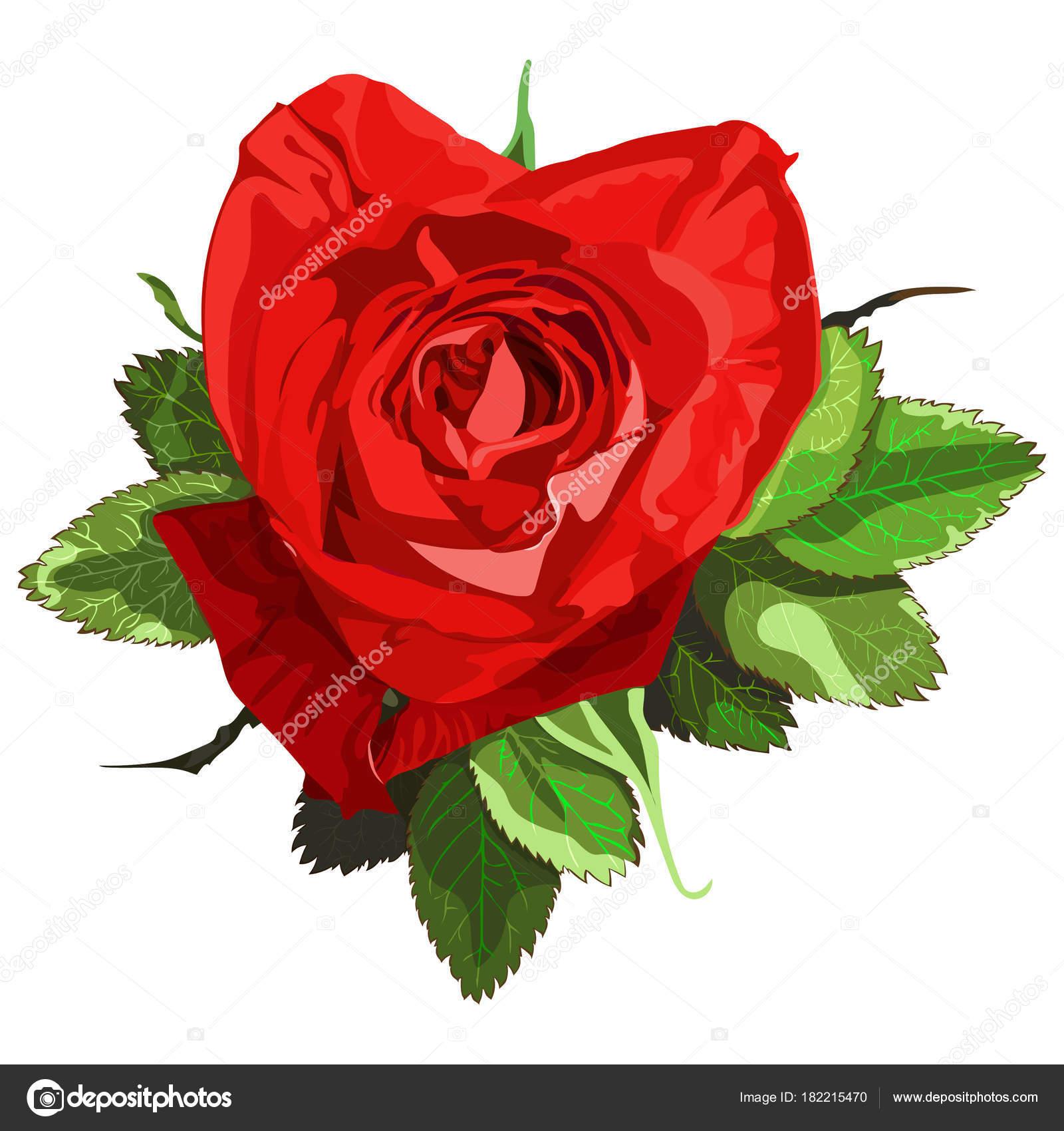 Une Fleur Rose Forme Coeur Image Vectorielle T5826203 Gmail Com
