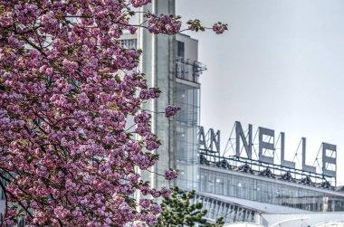 Rotterdam, The Netherlands, April 21, 2018: Pink flowering prunus tree in front of Unesco world heritage Van Nelle factory