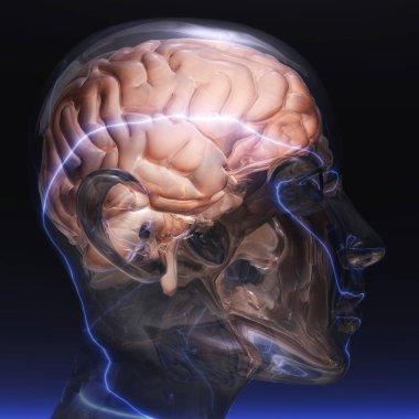 Human Brain color 3d illustration