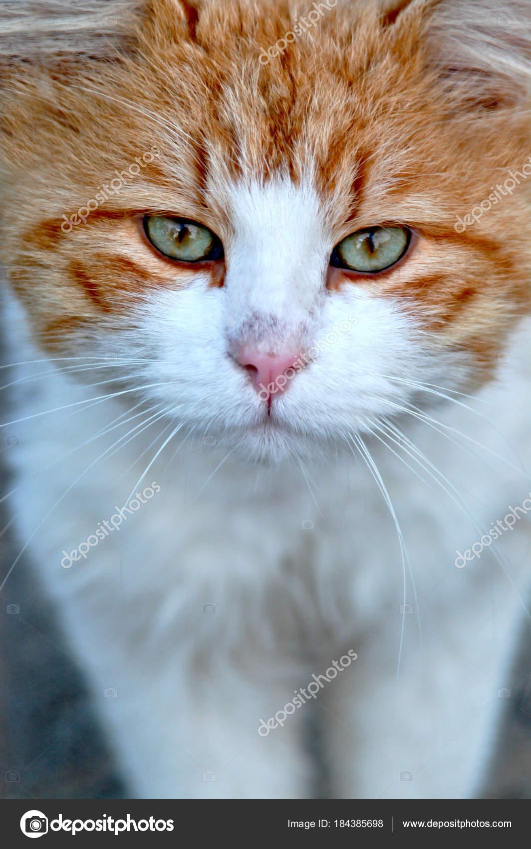 Petite photo de chatte