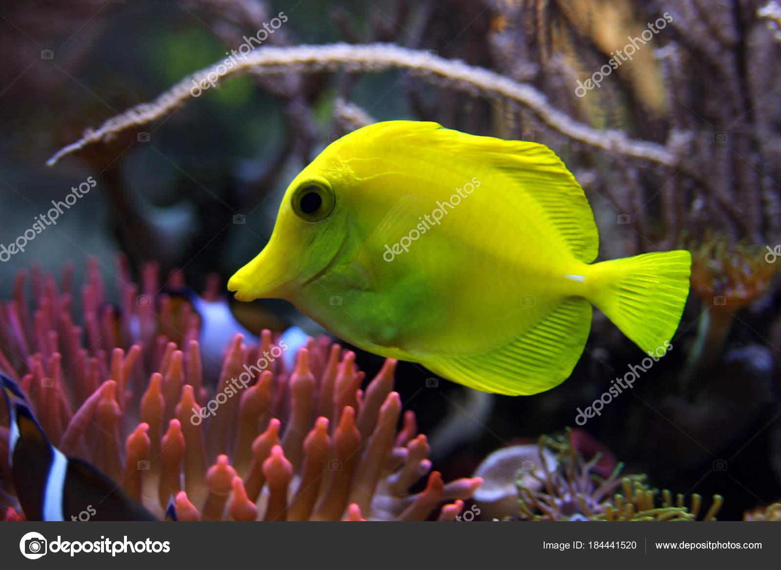 Beautiful Color Fish Close Shot — Stock Photo © CHROMORANGE #184441520