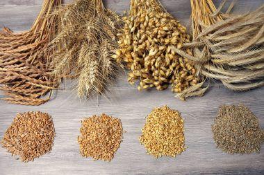 Standing Grain seeds close up shot stock vector