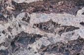 Fotografie Close-up Of tree Bark Of Common Oak