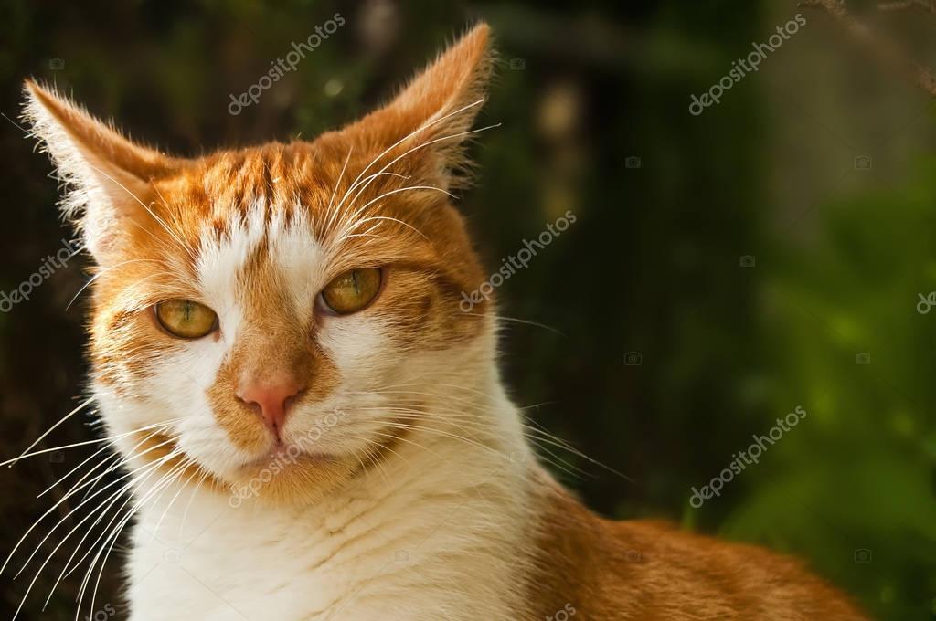 Amazing little cat close up