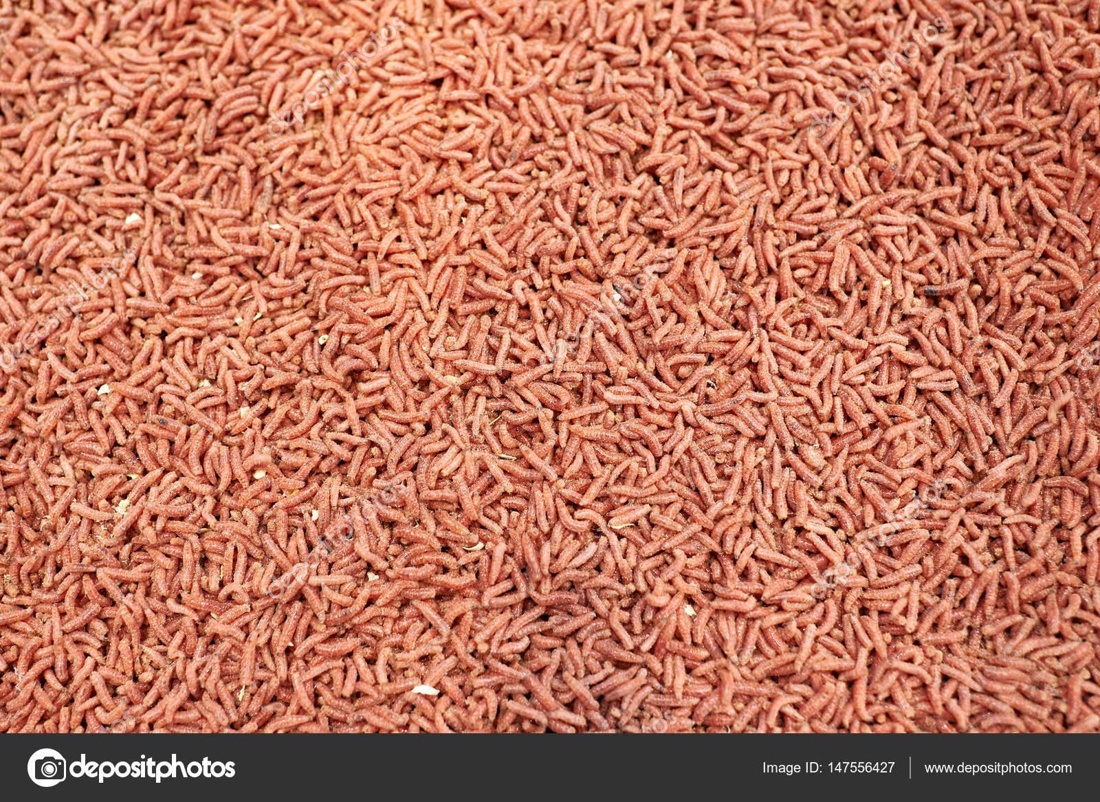 Красный личинка червя Прикормка для рыбалки — Стоковое фото ...