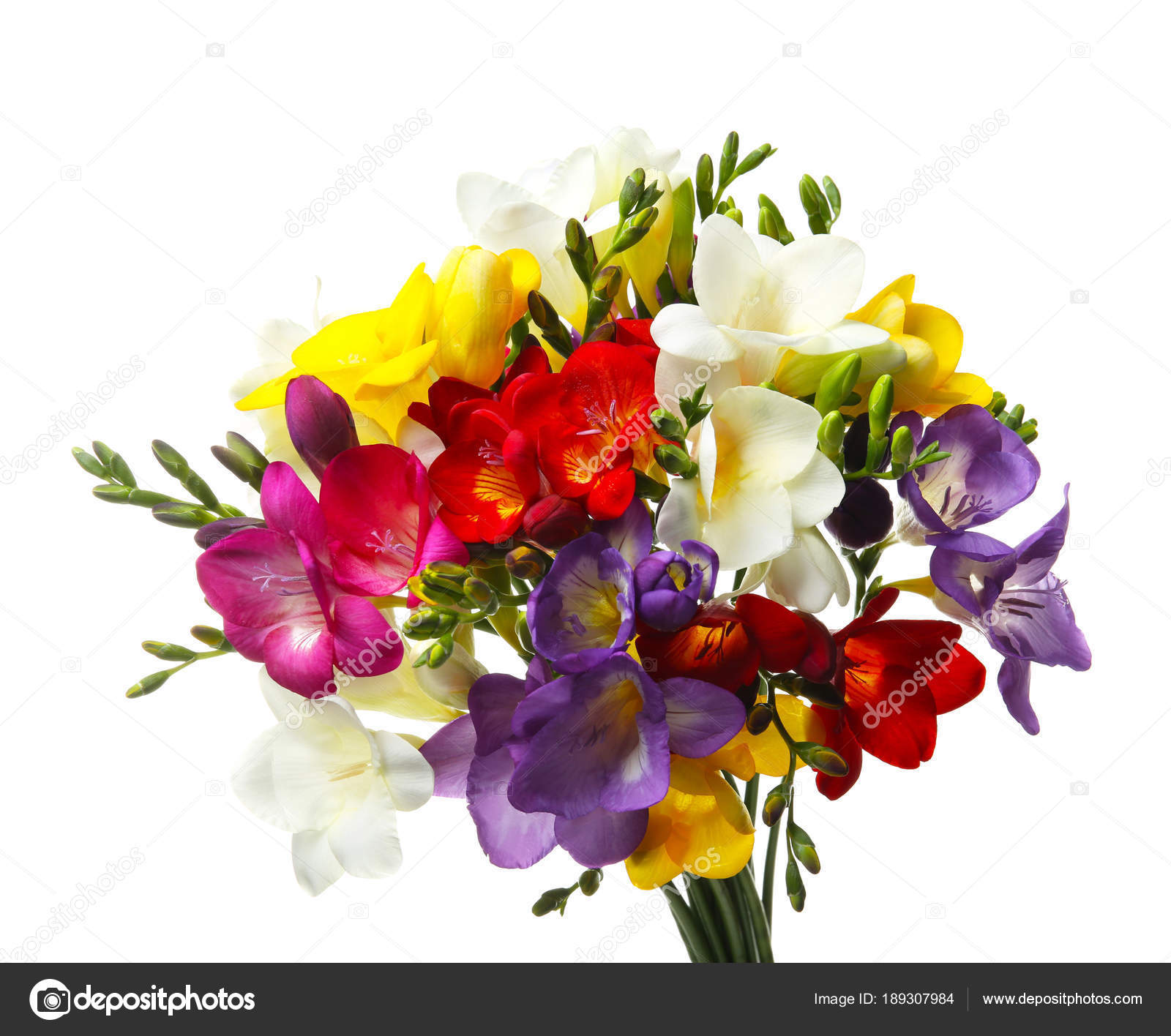 Bouquet of beautiful freesia flowers on white background stock bouquet of beautiful freesia flowers on white background photo by liudmilachernetskagmail izmirmasajfo