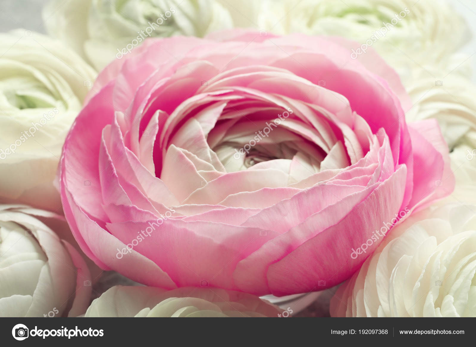 Красиво розовый цвет